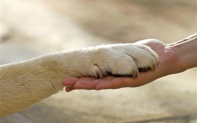 Foto Voglio Un Cane Per Natale